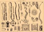 Основные виды паразитов и глистов